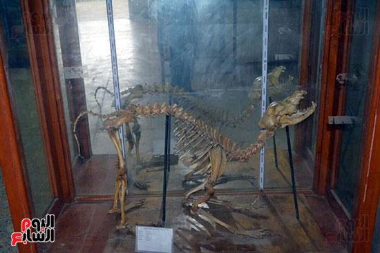 هيكل-لديناصور