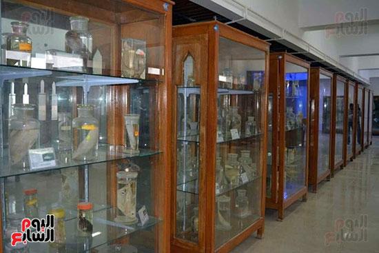 المتحف-يضم-مئات-الحيوانات-المحنطة