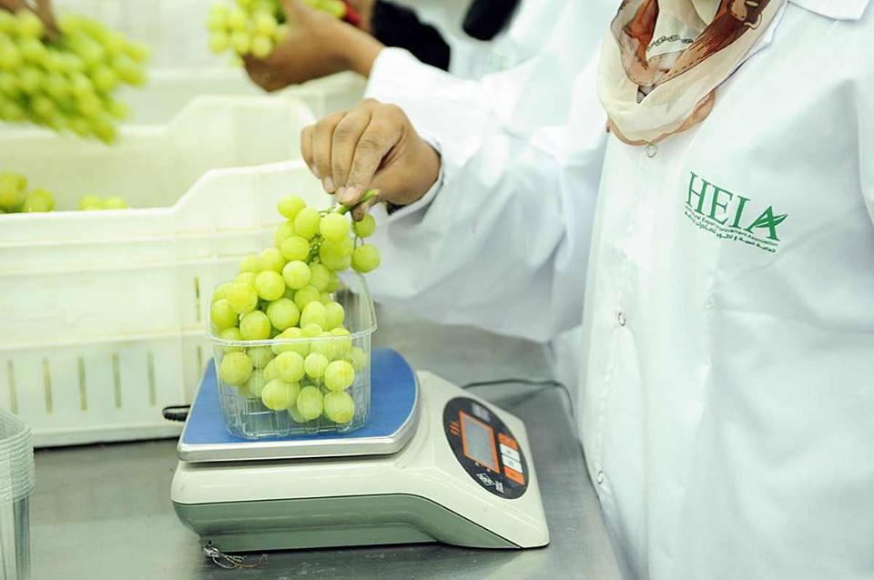 الأقصر تجهز محاصيلها الزراعية لتصديرها للخارج في محطتين للتعبئة والفرز والتغليف (1)