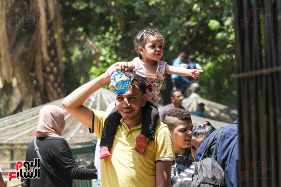 يحمل طفله فوق كتفه