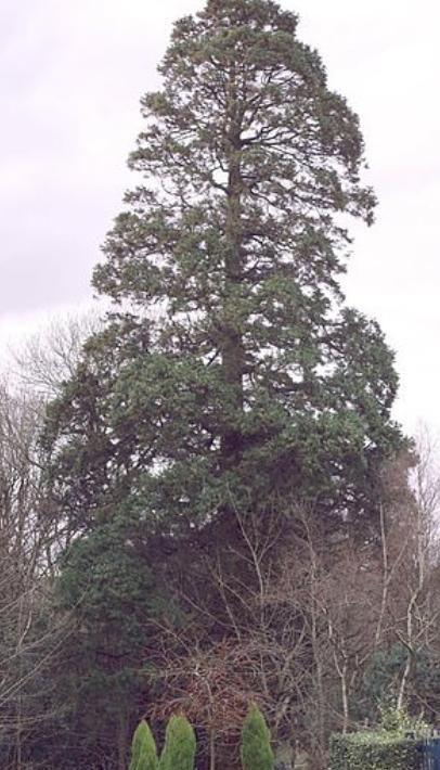الشجرة