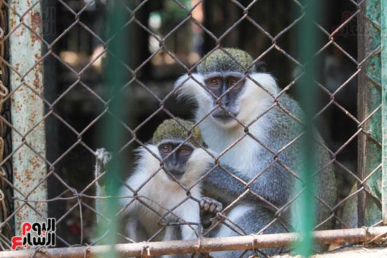 اقبال علي مشاهدة القرود