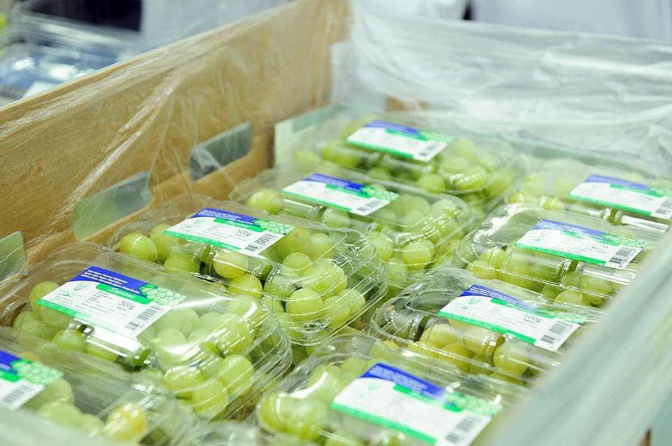 الأقصر تجهز محاصيلها الزراعية لتصديرها للخارج في محطتين للتعبئة والفرز والتغليف (9)