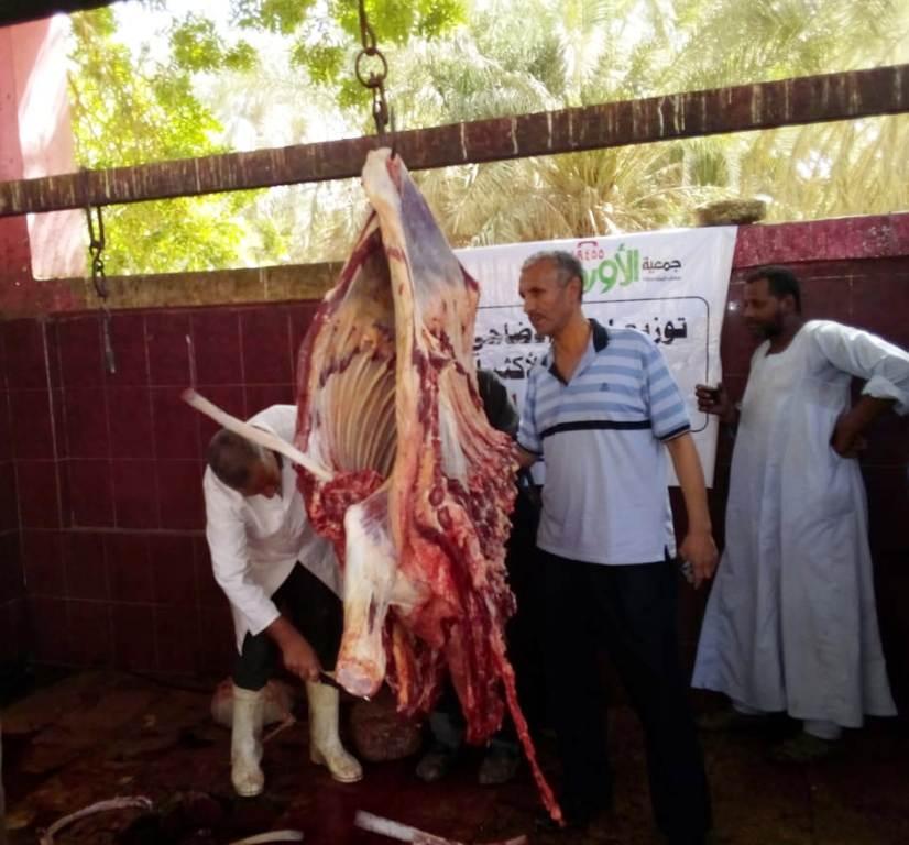 المجازر البيطرية تواصل ذبح الأضاحى بالمجان للمواطنين بأسوان (2)