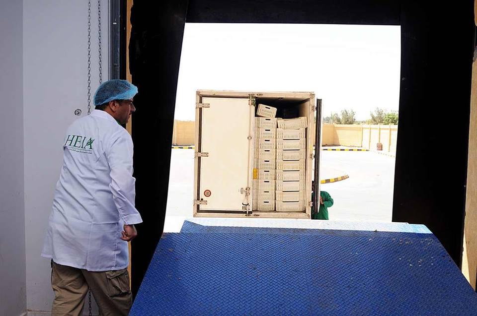 الأقصر تجهز محاصيلها الزراعية لتصديرها للخارج في محطتين للتعبئة والفرز والتغليف (16)