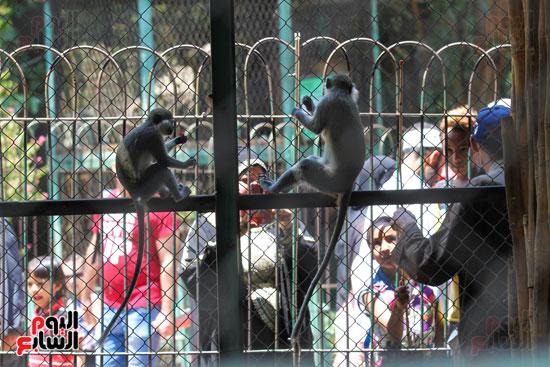 الاطفال يلعبون مع اقرود