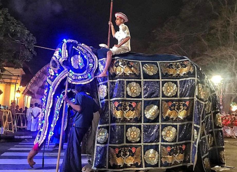 الفيل تيكيرى فى زيها فى المهرجان