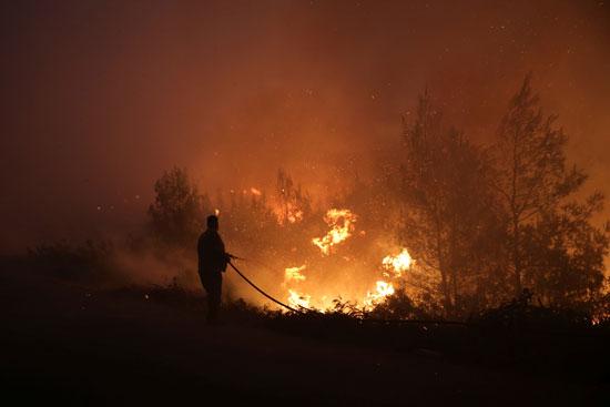 حرائق هائلة بغابات جزيرة إيفيا فى اليونان (5)