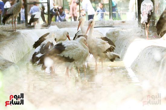 الطيور داخل  حديقة الحيوانات