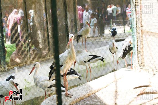 عيد الاضحى داخل حديقة الحيوان