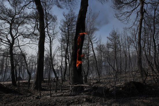 حرائق-الغابات