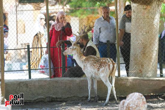 الزائرين يشاهدون جمال  الغزالة