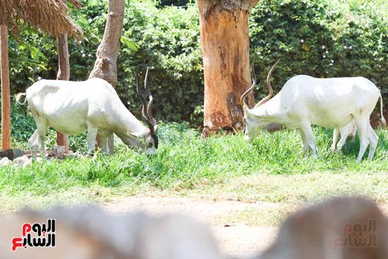 جمال الحيوانات في الحديقة