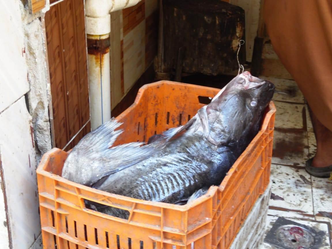 تراجع  فى أسعار الأسماك (6)