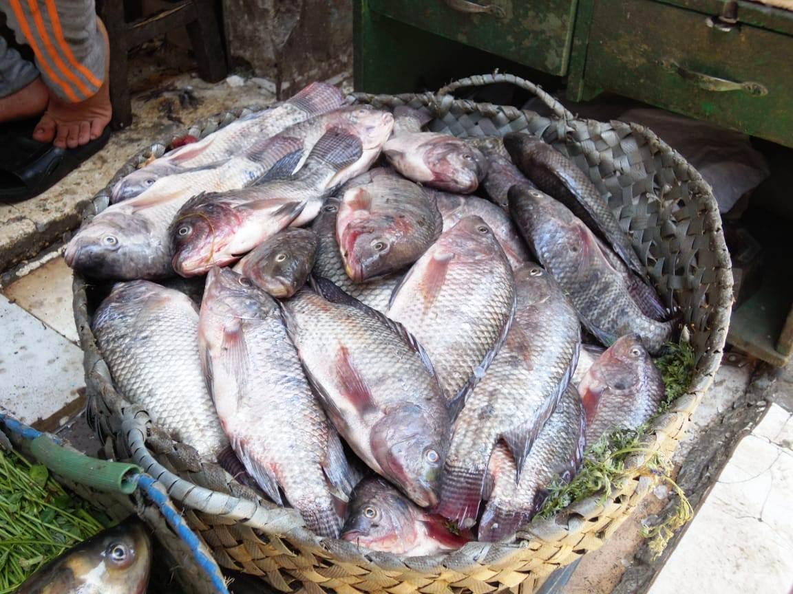 تراجع  فى أسعار الأسماك (7)