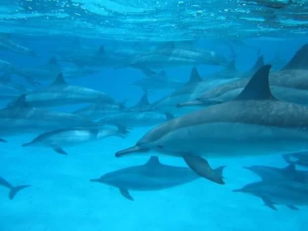 محميات البحر الأحمر  (1)