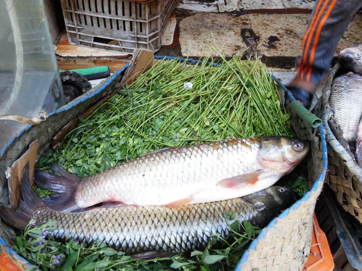 تراجع  فى أسعار الأسماك (8)