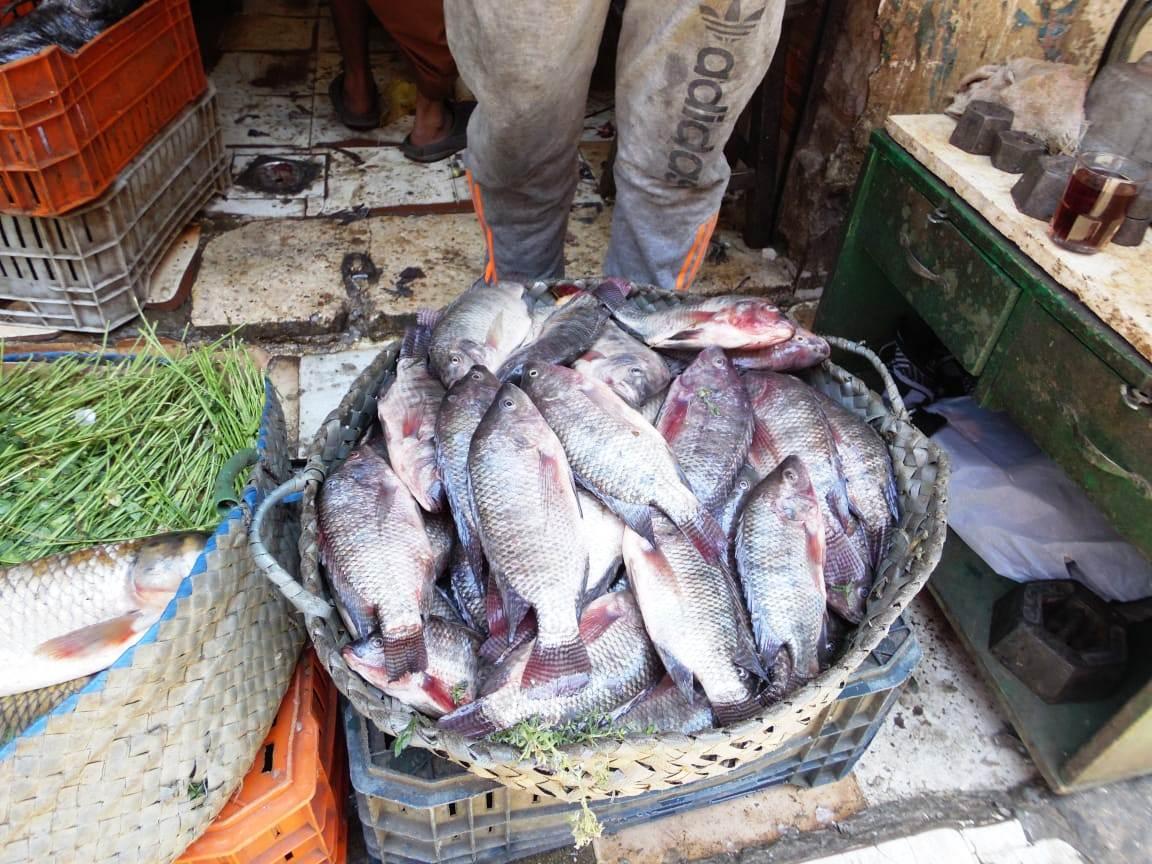تراجع  فى أسعار الأسماك (11)