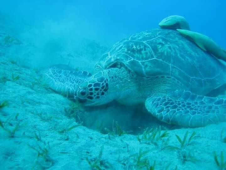 محميات البحر الأحمر  (3)