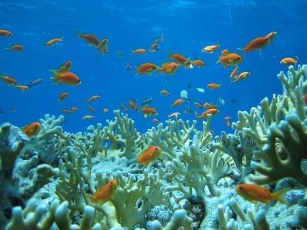 محميات البحر الأحمر  (6)