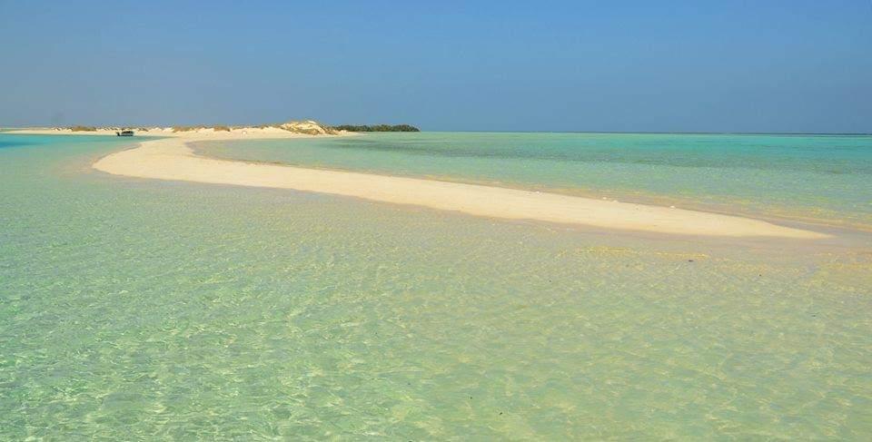 محميات البحر الأحمر  (2)