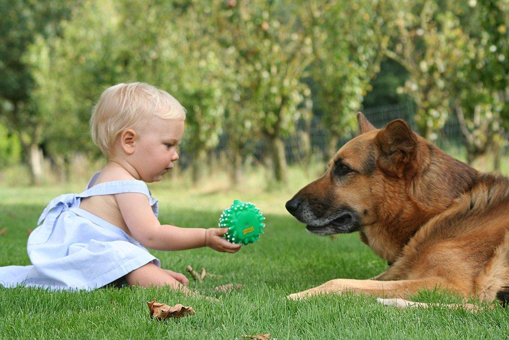 إزاى تخلى طفلك مايخافش من الكلاب (1)