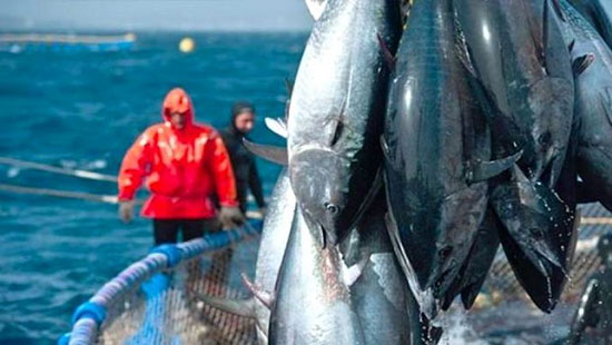 صيد سمك التونة (1)