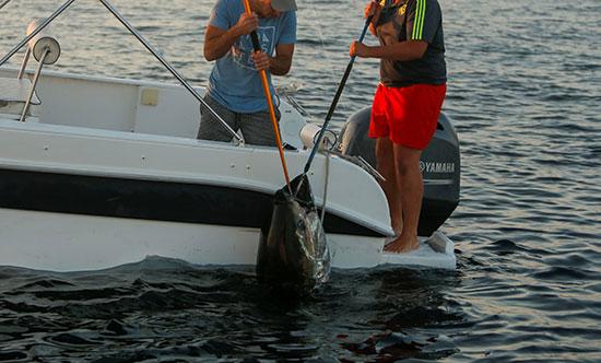 صيد سمك التونة (2)