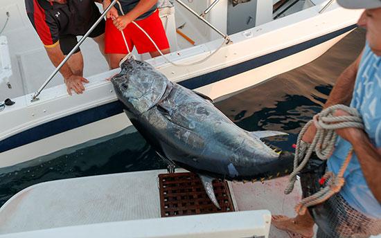 صيد سمك التونة (6)