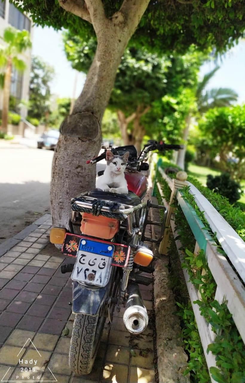 القط على الدراجة البخارية