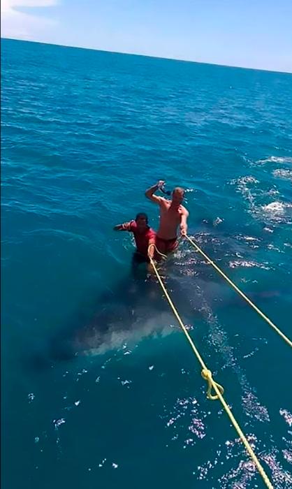 شخصان يتزلجان على الحوت القرش