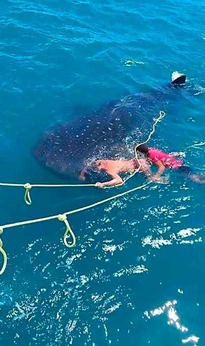 الحوت المهدد بالانقراض