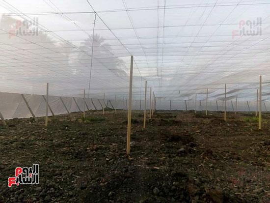 الصوبات الزراعية (1)