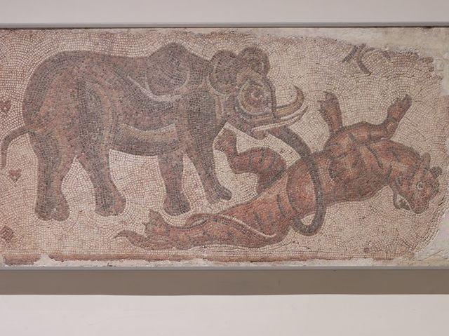 مصارعة الأفيال