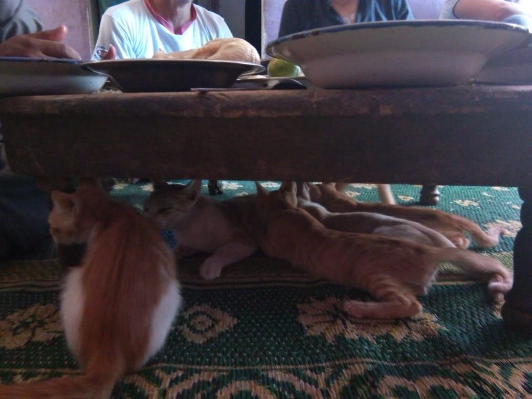 قطة ترضع أبنائها تحت الطبلية