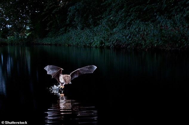خفاش 2