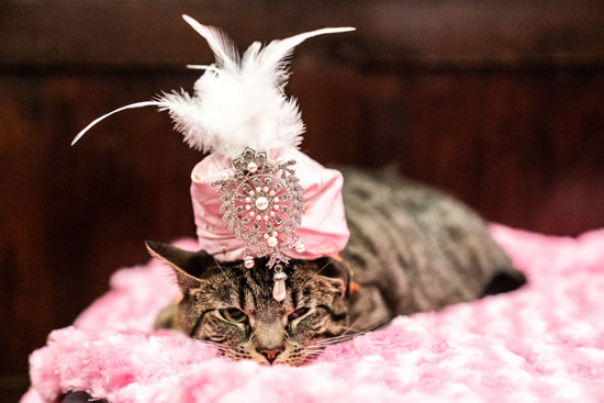 عرض أزياء للقطط فى نيويورك (7)