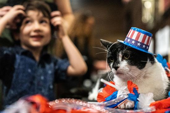 عرض أزياء للقطط فى نيويورك (3)
