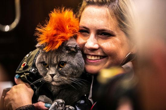عرض أزياء للقطط فى نيويورك (1)