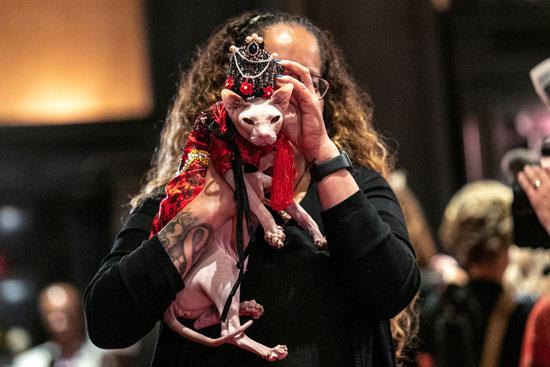 عرض أزياء للقطط فى نيويورك (13)