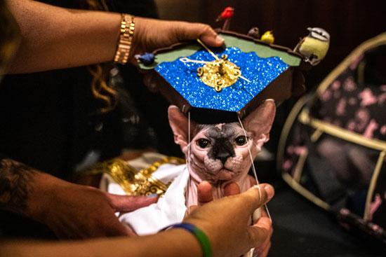 عرض أزياء للقطط فى نيويورك (4)