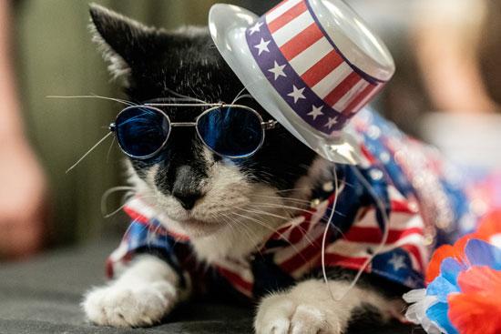 عرض أزياء للقطط فى نيويورك (6)