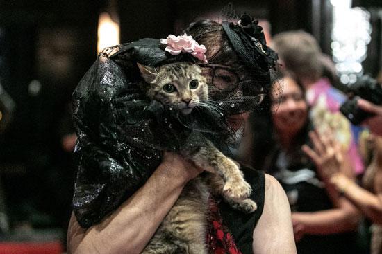 عرض أزياء للقطط فى نيويورك (14)