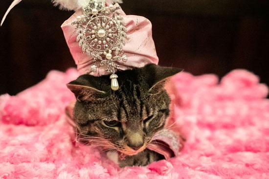 عرض أزياء للقطط فى نيويورك (9)
