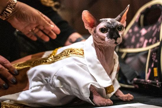 عرض أزياء للقطط فى نيويورك (2)