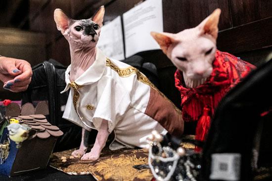 عرض أزياء للقطط فى نيويورك (10)