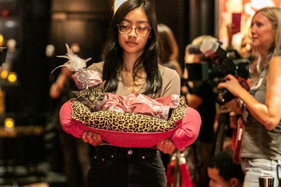 عرض أزياء للقطط فى نيويورك (15)