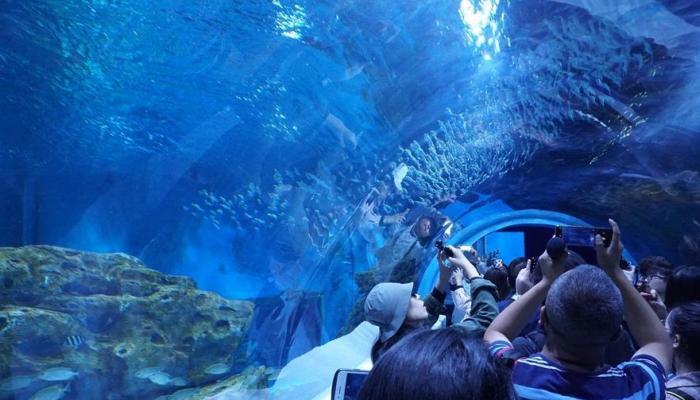 78-142234-china-top-aquarium-world_700x400