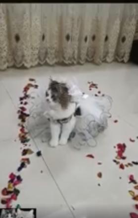 حفل زفاف لقط وقطة (3)