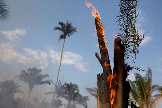 تدمير غابات الامازون